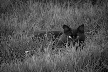 Catgrass by amarouq2