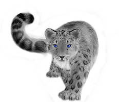 Snow Leopard by Greys15Practicefan