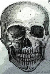 Skull Front View Reworked