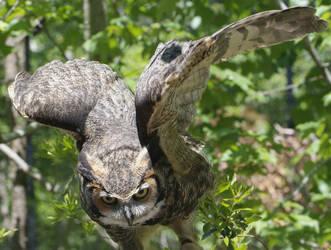 owl by gothboy23