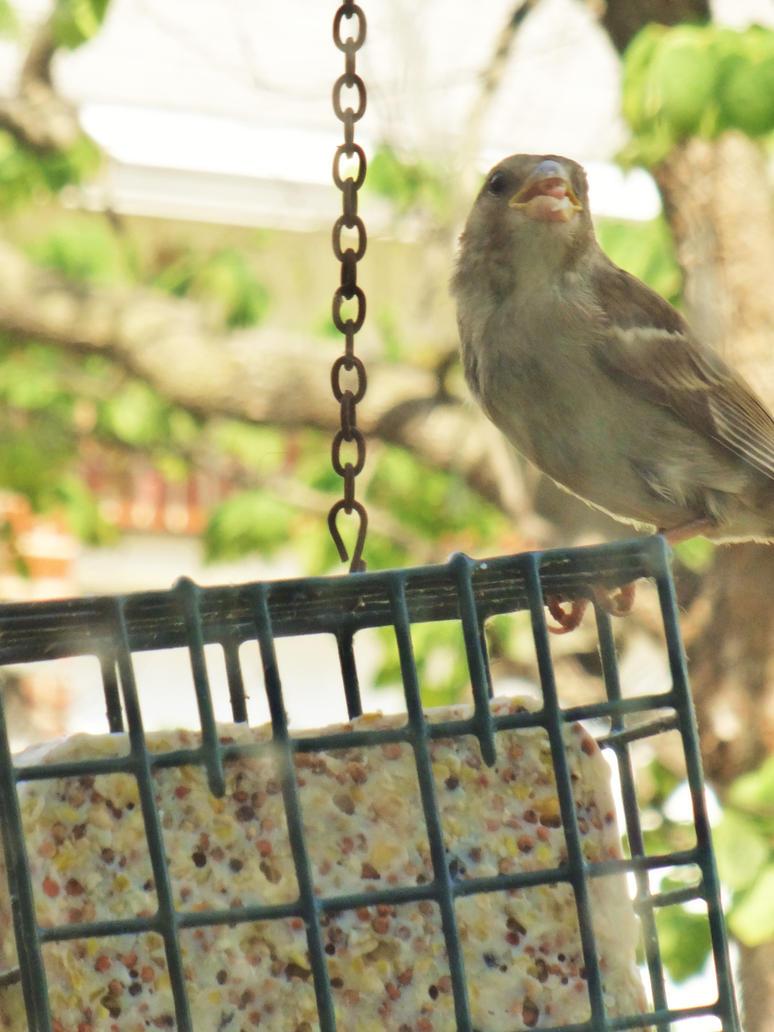 Birdy food 2 by uglyinky