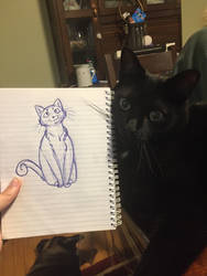 Jasper the kitty and a cat sketch