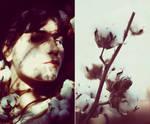 Cotton Blossoms by ElifKarakoc