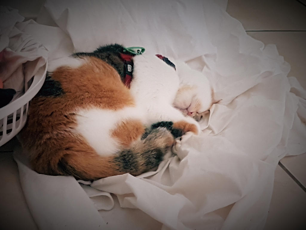 Sleepy Kitty by crystal-kamikara153