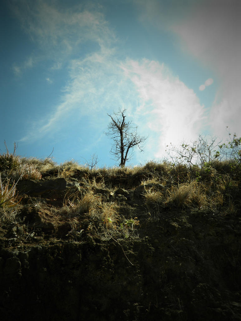 Tree On A Mountain By Beautyoftheheart On Deviantart