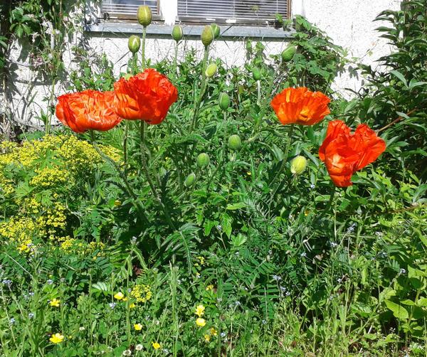Kukkia by Tupunoor