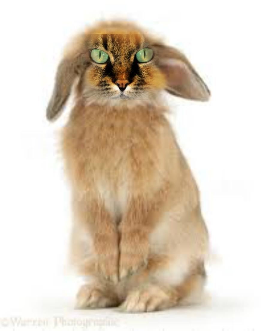 Cat Rabbit Hybrid By Virgilviscacha