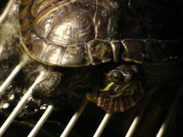 Turtlebold