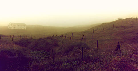 Fog And Summer