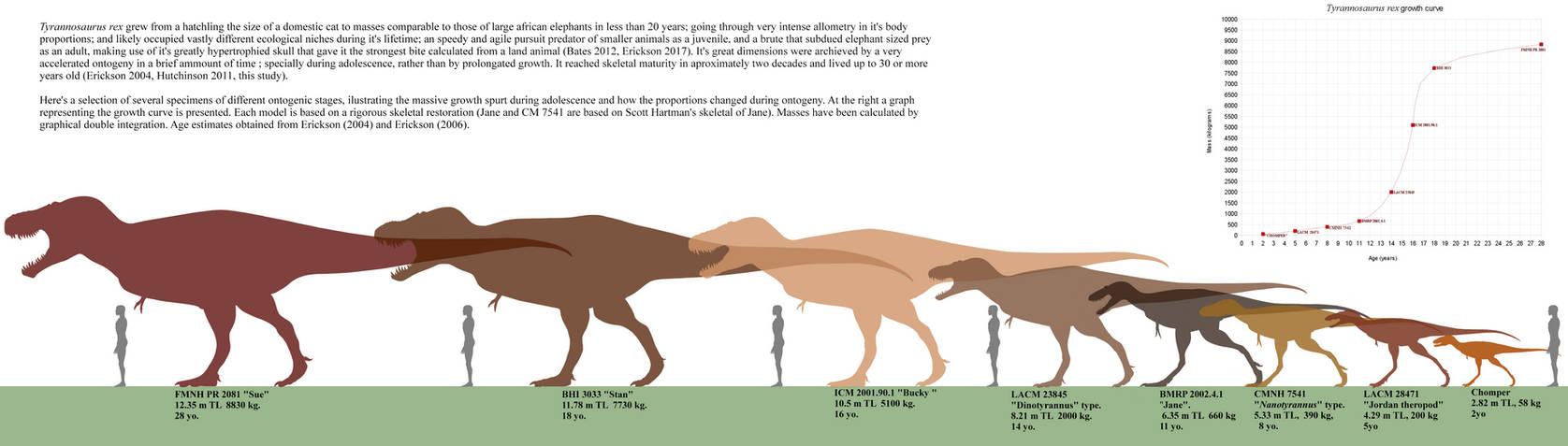 Tyrannosaurus rex ontogeny. by Franoys