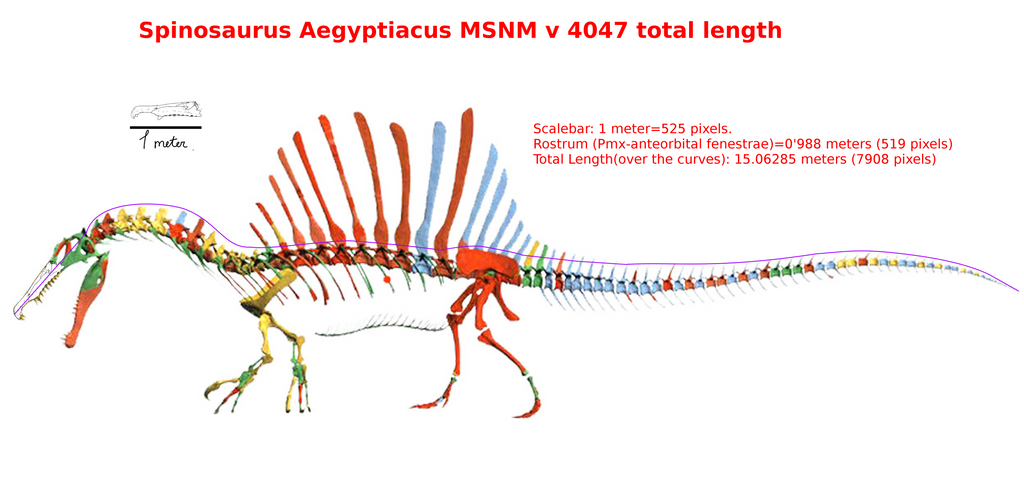 Spinosauruslength by Franoys