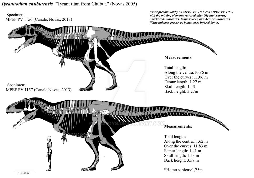 Tyrannotitan Chubutensis Skeletal Diagrams Mklll By Franoys On The Human Body Bones Skeleton How They Work