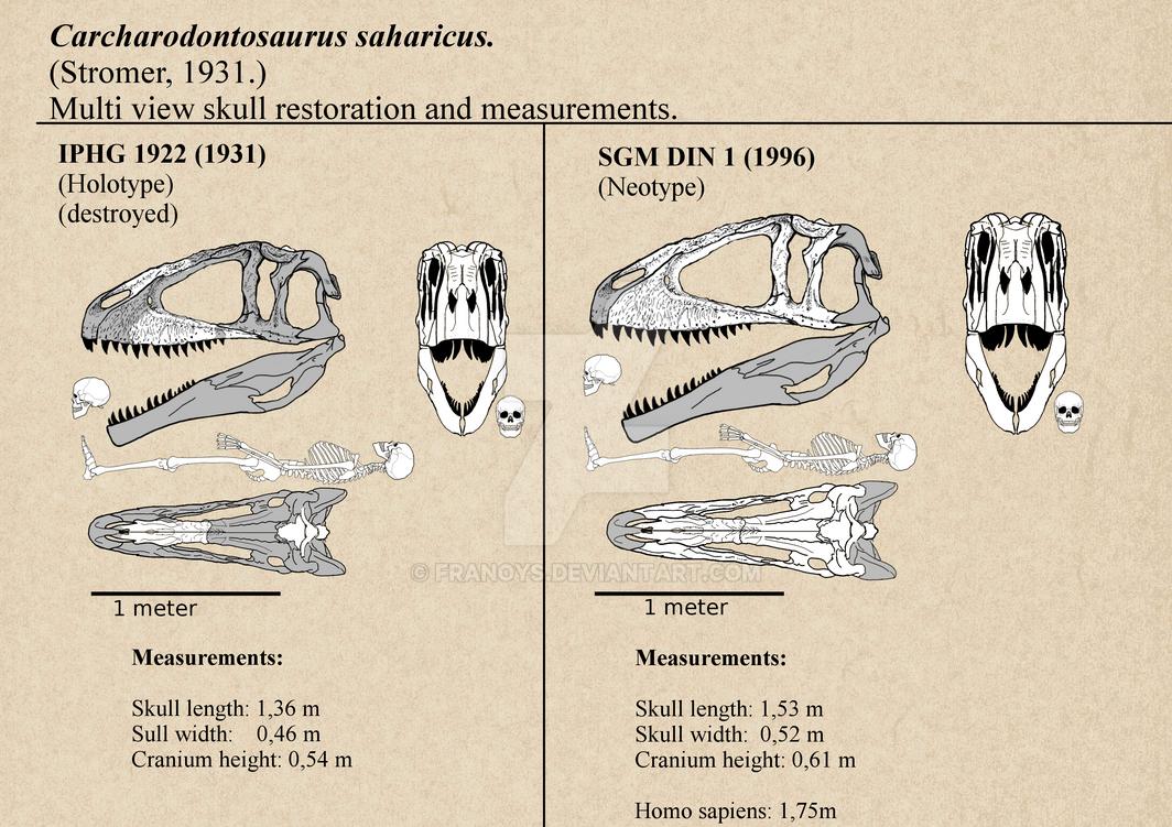 Carcharodontosaurus Skulls multi view. by Franoys
