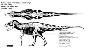 Tyrannosaurus rex skeletal diagram (FMNH PR 2081)