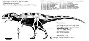 Mapusaurus roseae skeletal diagram.
