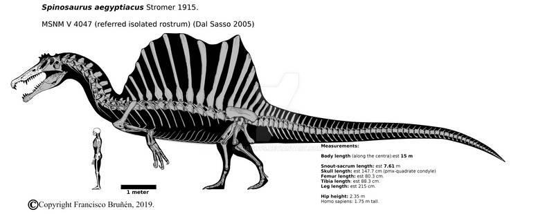 Spinosaurus aegyptiacus skeletal (MSNM v 4047)