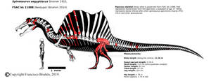 Spinosaurus aegyptiacus FSAC kk 11888 rigorous.
