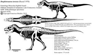 Daspletosaurus torosus skeletal reconstruction.
