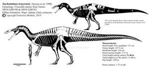 Suchomimus tenerensis skeletal reconstruction.