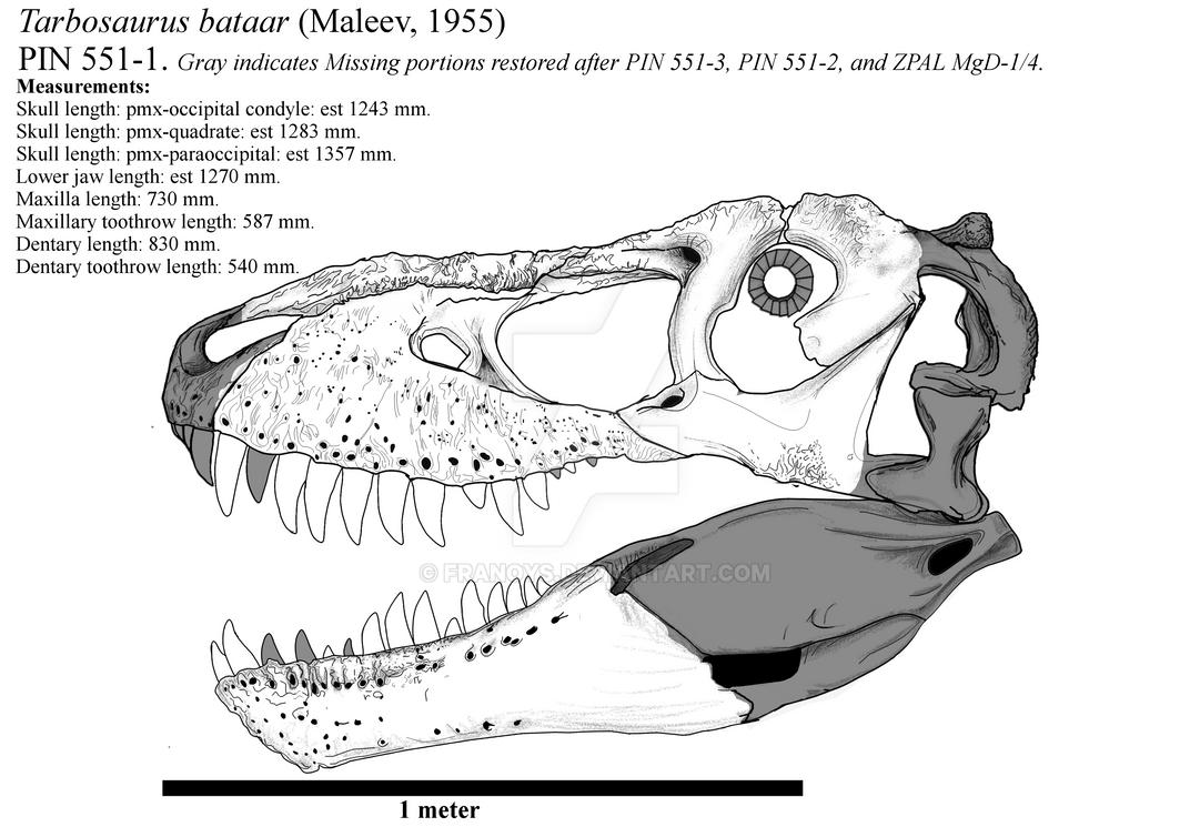 Tarbosaurus bataar PIN 551-1 skull restoration. by Franoys