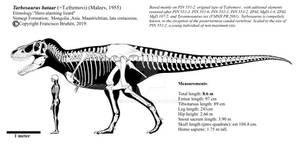 Tarbosaurus bataar PIN 551-2 skeletal diagram.
