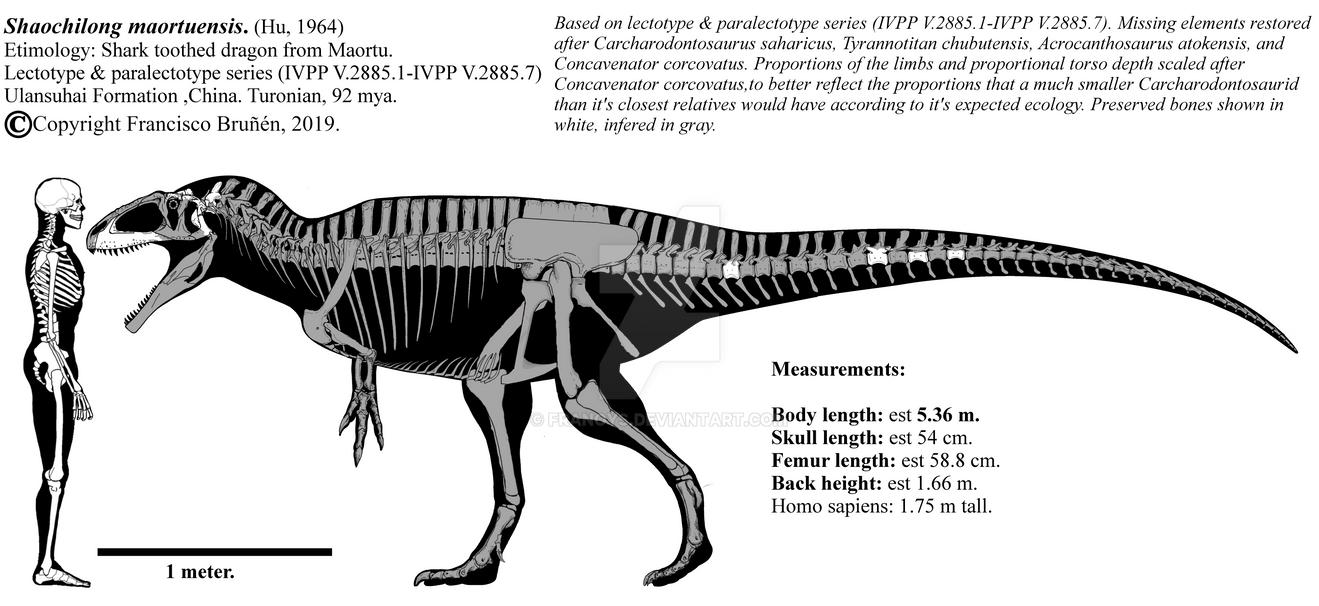 Shaochilong maortuensis skeletal diagram. by Franoys