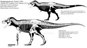 Tyrannosaurus rex skeletal diagram (AMNH 5027)