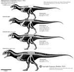 Majungasaurus crenatissimus skeletals.