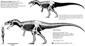 Allosaurus fragilis skeletal (DINO 2560).