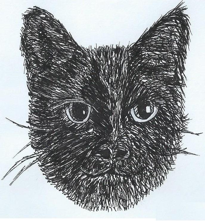 Black Cat by abolatinge