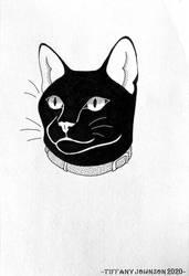 Coal Cat by AligerousWayfarer