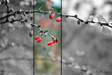 Berries by Privycane