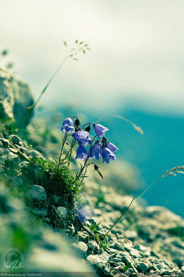 Bluebell by TheRenART