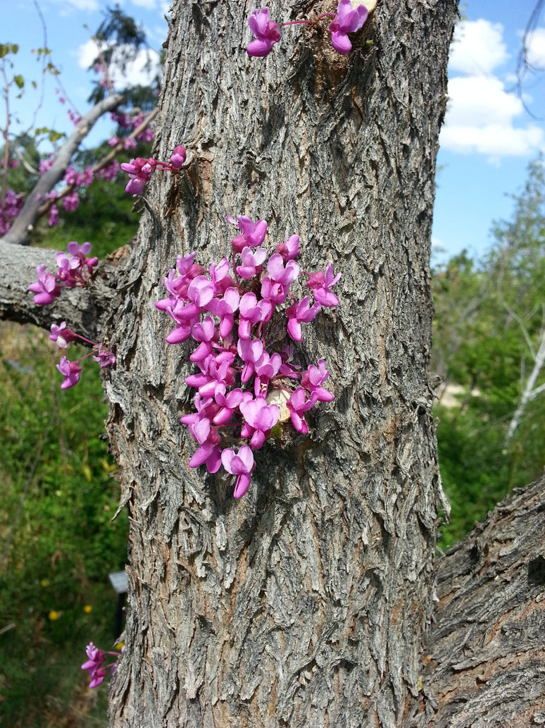 Flowers growing out of a tree trunk by ladyrednv on deviantart - Flowers that grow on tree trunks ...