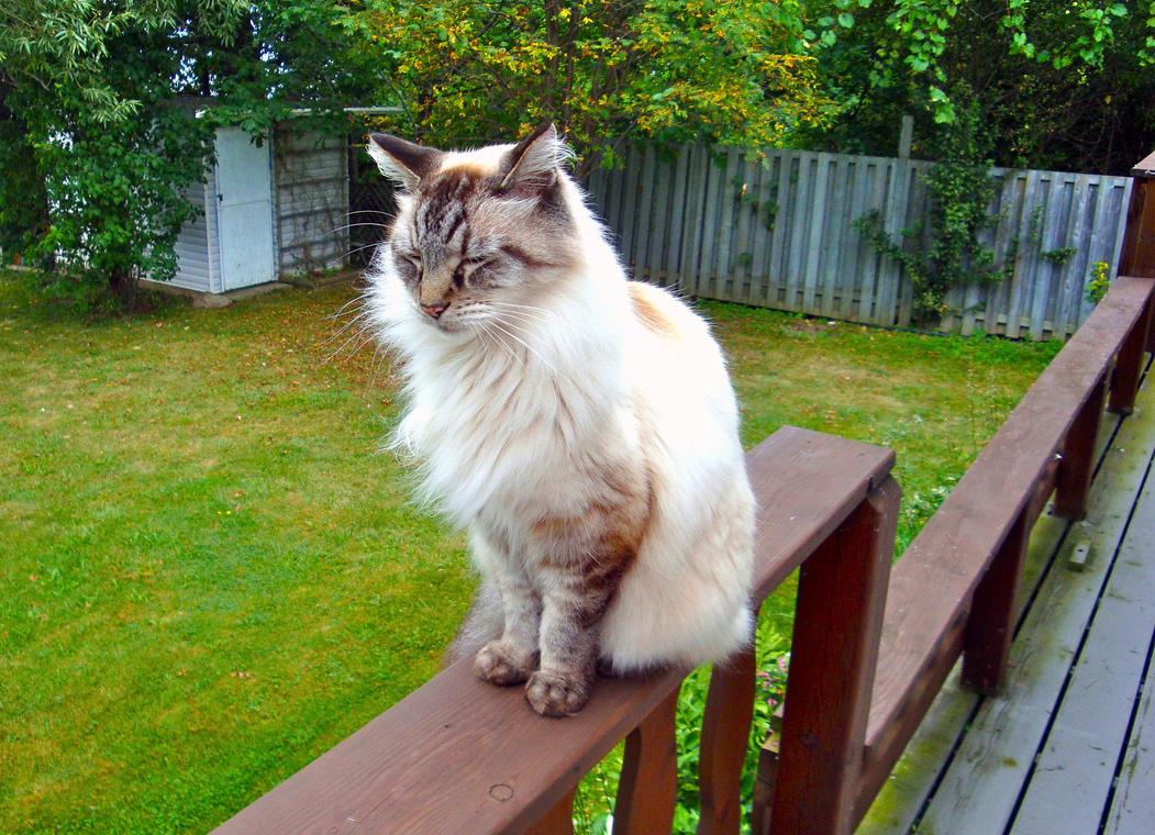 Meet Philip~It's a boy cat! by Cassandrina