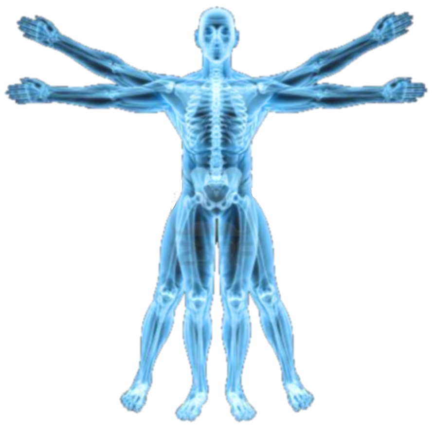 Vitruvian Man X Ray Icon By Slamiticon D62uf3s Png 894