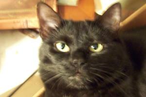 CAT PLANET by GreenTeaDeer