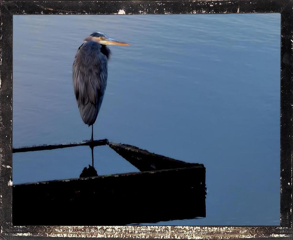 Blue Heron Back Creek Framed by mrdeforrest