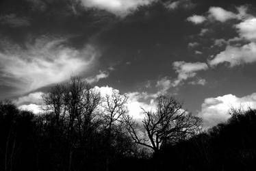 Twisted Trees by chriskronen