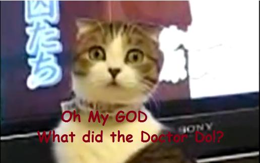My OMG WTF Cat Caption -FUNNY- by Lady-ALTernate