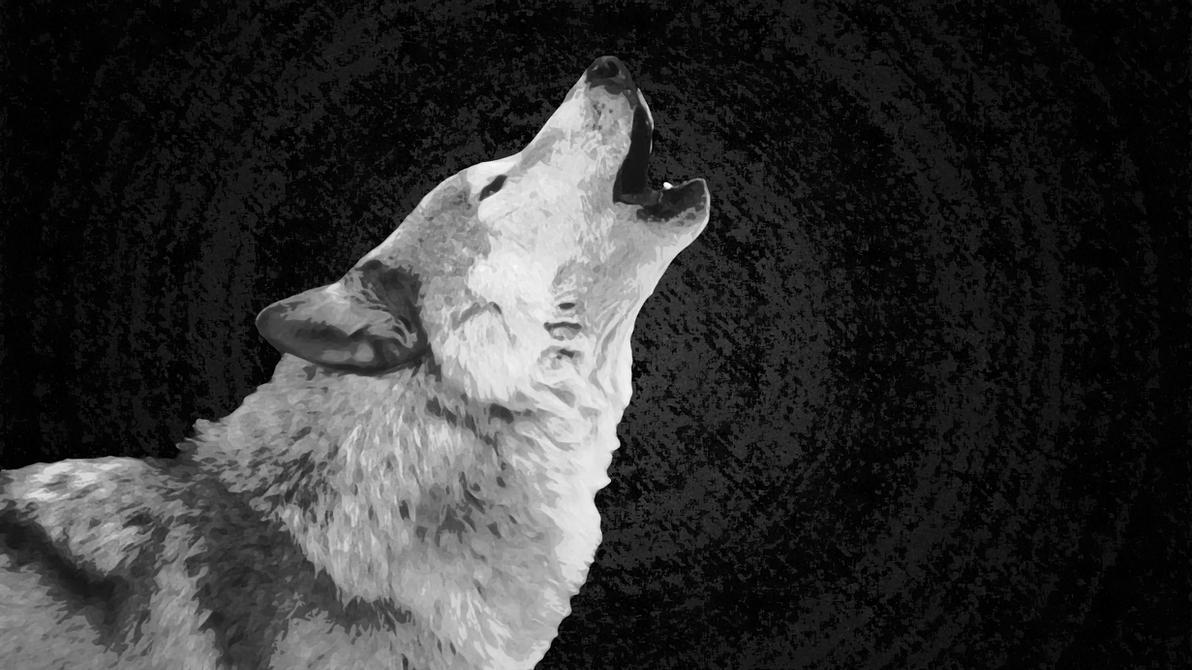 Wolf Wallpaper White By XHuskie