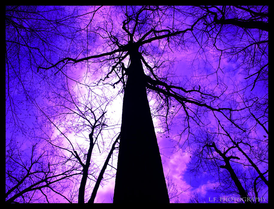 Purple Haze by LeahCF