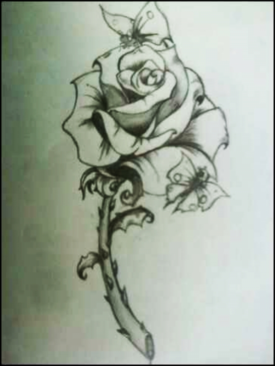 Butterfly on a rose drawing