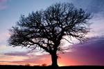 Grandfather Tree Sunset