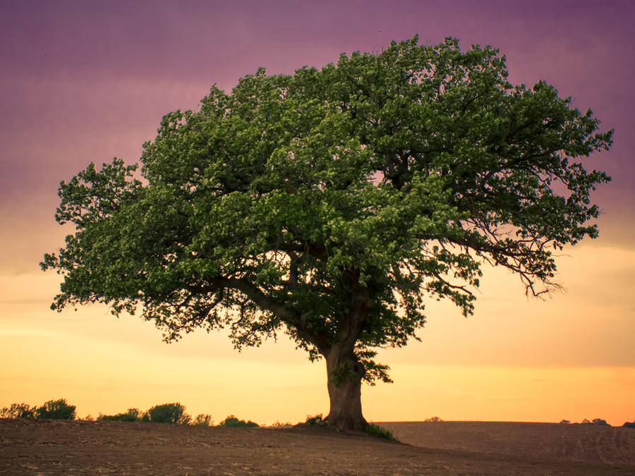 Grandfather Tree ~ Spring by quasi-Virtuoso