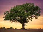 Grandfather Tree ~ Spring