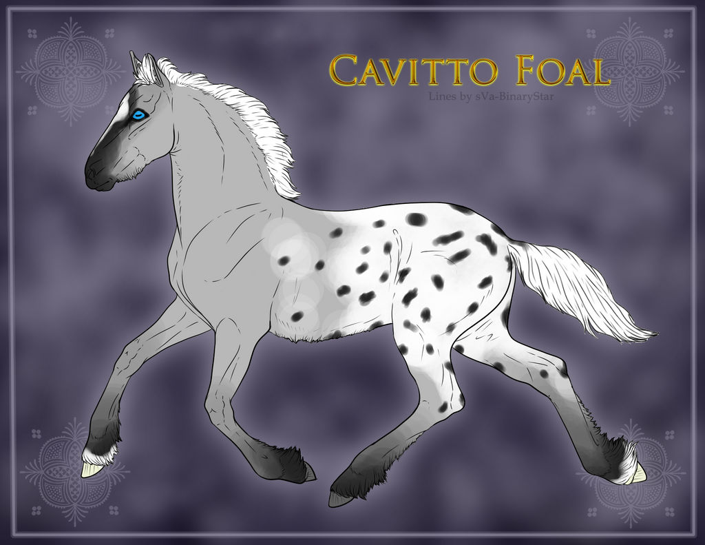 1124 Cavitto foal