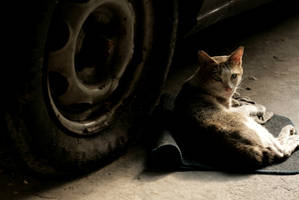 tyred cat by memoody