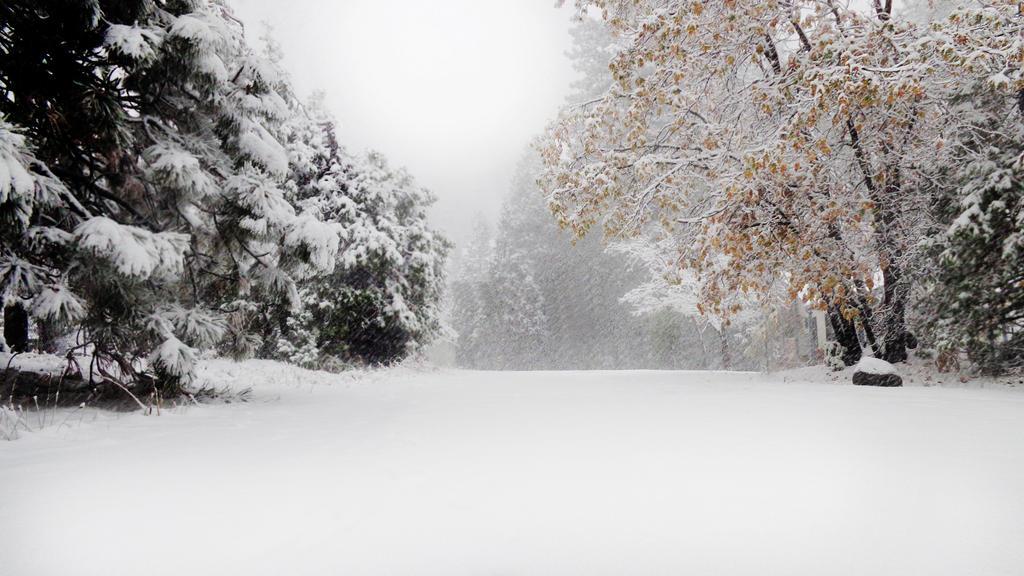 First Snow by Neuhisstihr