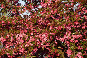 Spring by utico